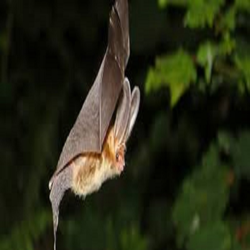 International Bat Weekend Walk